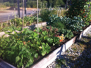 February Meeting Is Cancelled Gardening Community