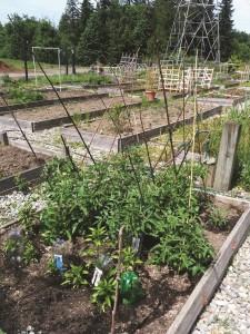 Community Garden Brown plot 2014