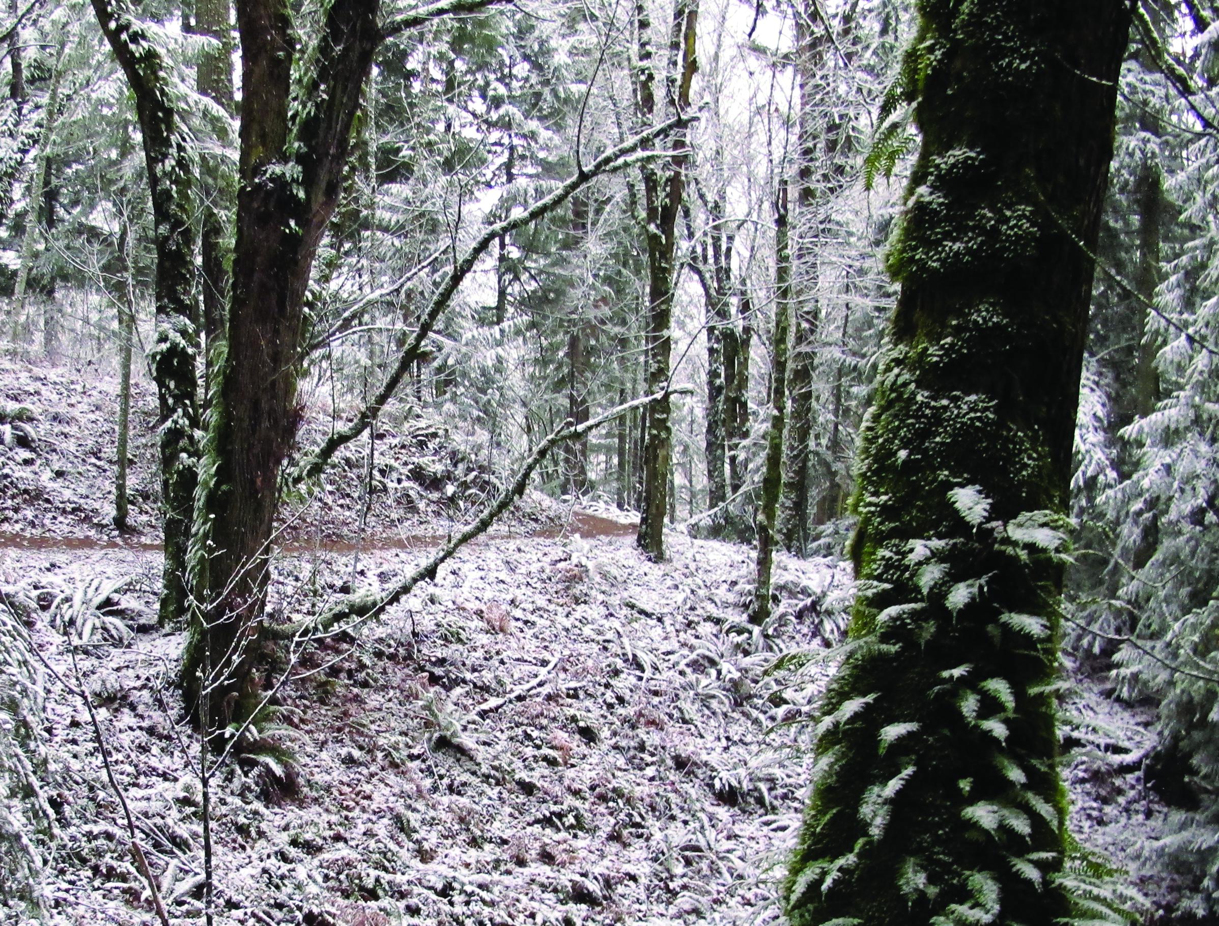 Late November Snow on Grand Ridge Trail