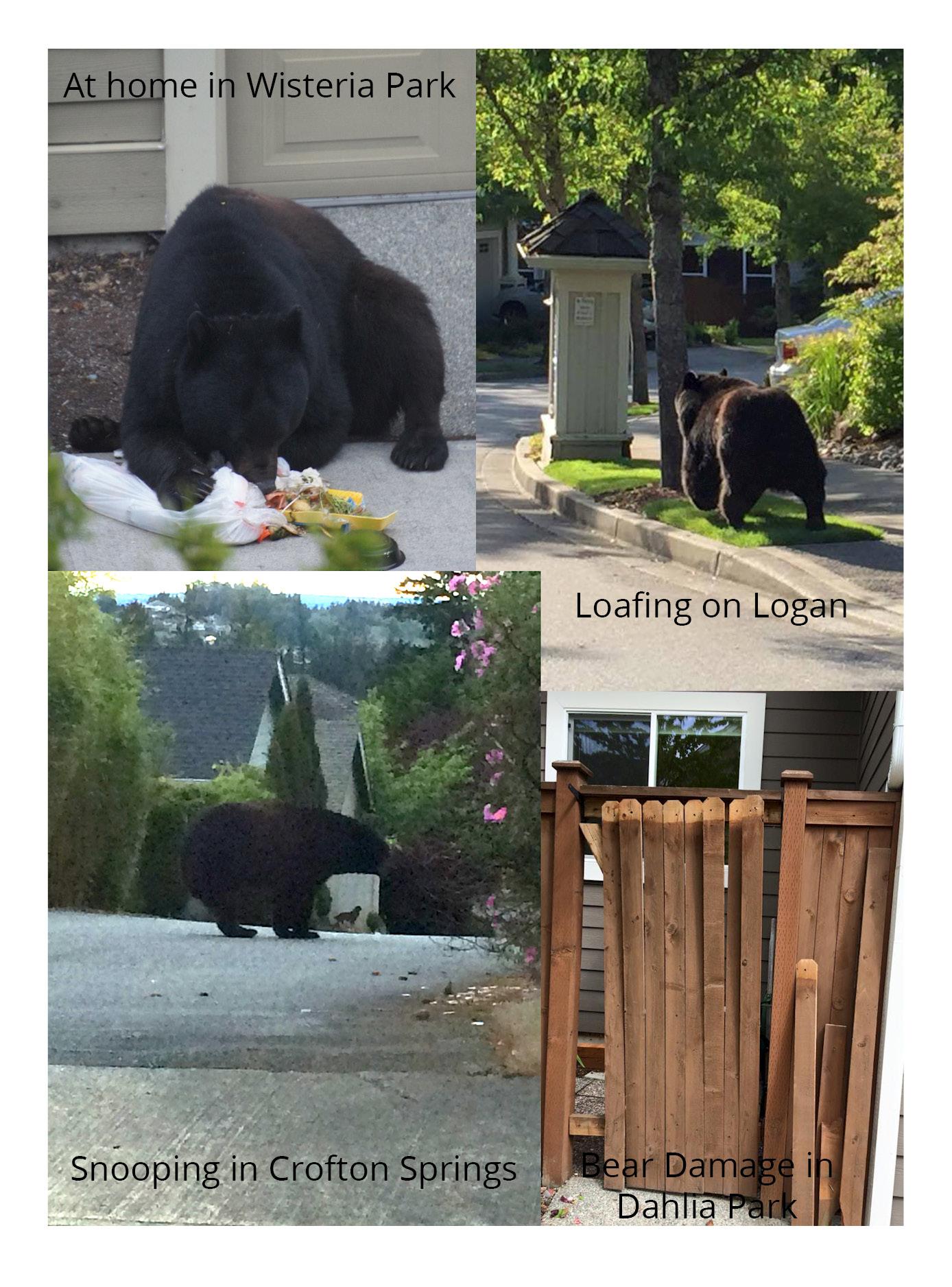 Bears in IH 2015