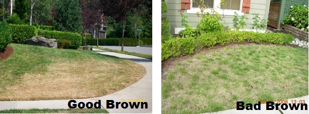 IHCA Arc tip lawn brown April 2015 labeled