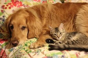 Pet Appreciation Dear Tully and kitty