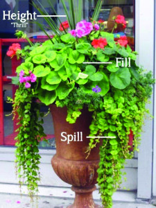 ID Outdoor Spaces August 2015 Plants