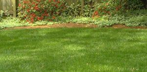 ihca-healthy-lawn