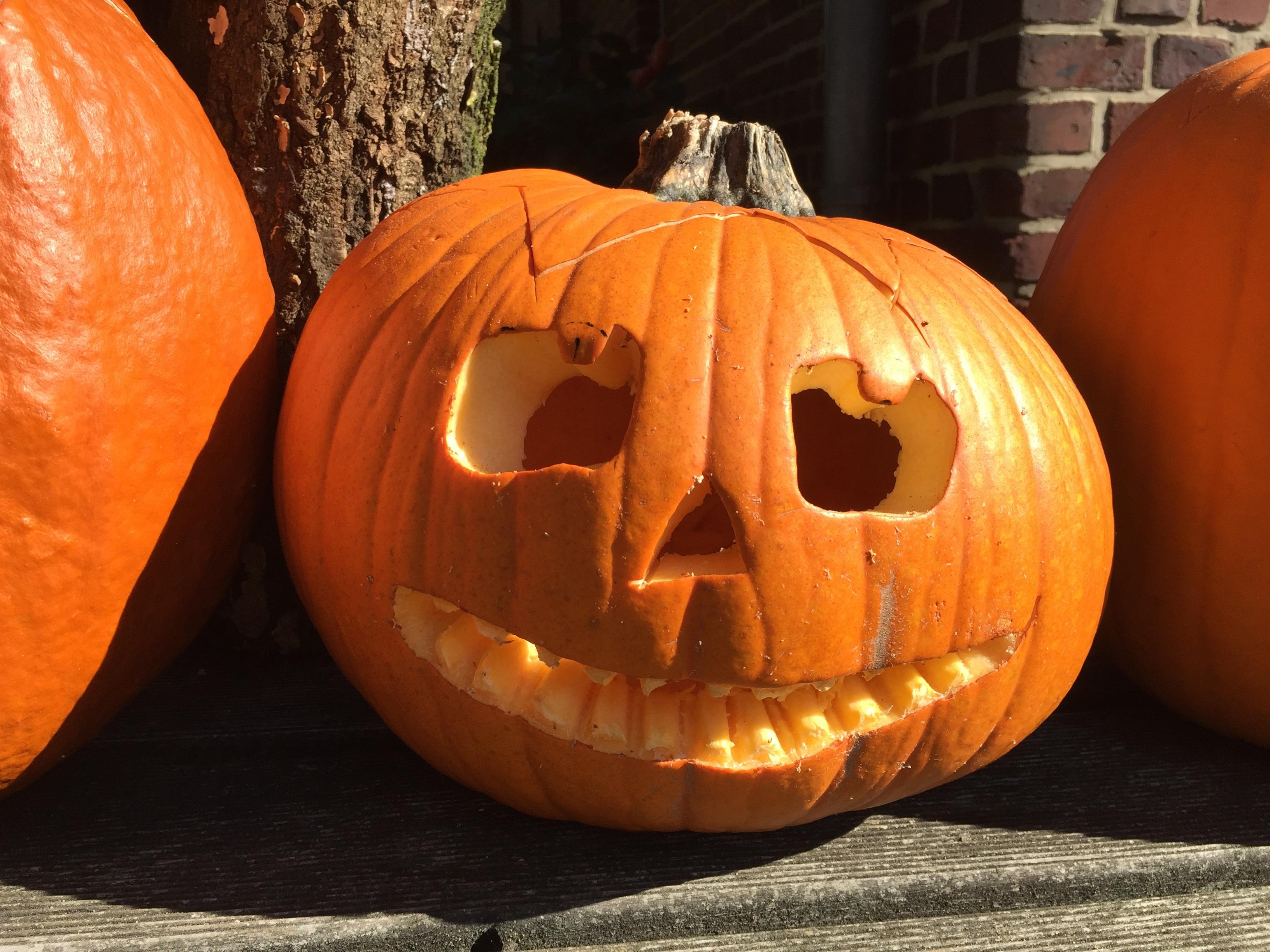 pumpkin-eletter-1016