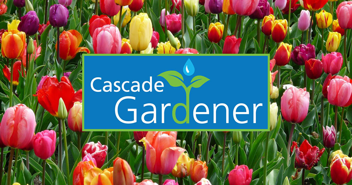 Cascade Gardener classes Issaquah Highlands