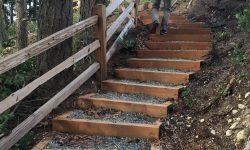 Westridge South Forest Trail