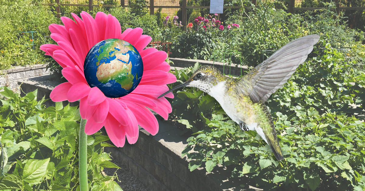 Be the Hummingbird Issaquah Highlands Live Green