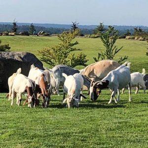 2019 Issaquah Highlands Goat Escape Grand View Park