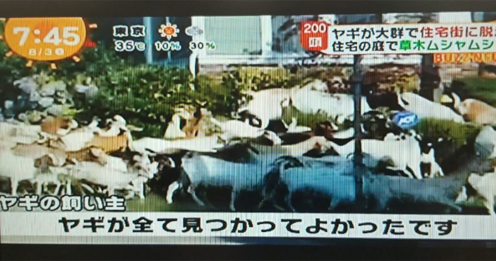 Issaquah Highlands Goats TV