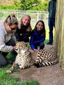 Pet a cheetah south Africa