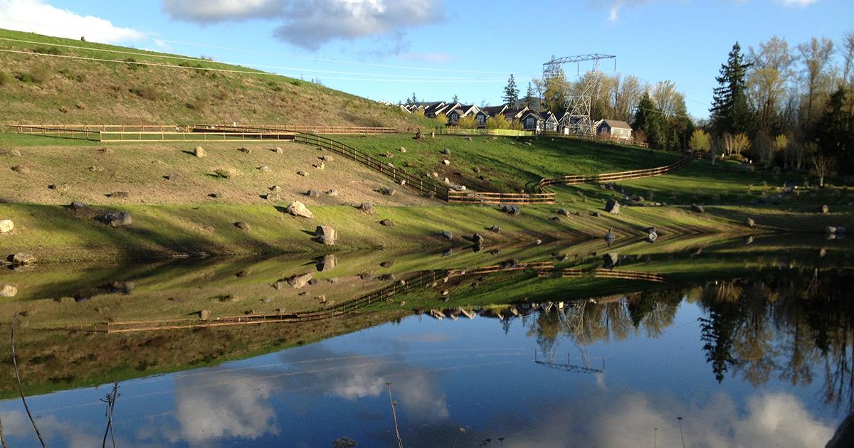Bark Park Pond by Nina Milligan