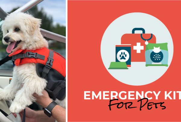 emergency kits for pets